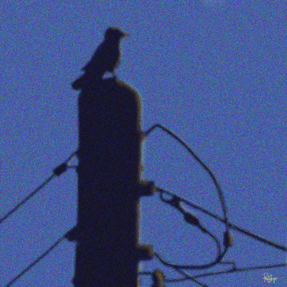 pole wires bird